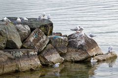 The seagulls Stock Images
