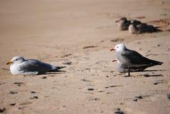 Seagulls Royalty Free Stock Image