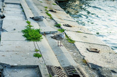 Seagulls Resting On Ferry Port Royalty Free Stock Photos