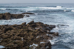 Seagulls Resting on Rock Formations in La Jolla. Seagulls resting on rock formations in the ocean in La Jolla, California Royalty Free Stock Photography