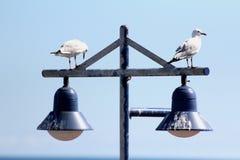 Seagulls resting on street lights Royalty Free Stock Photos