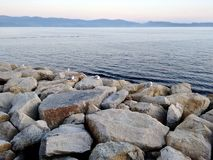 Seagulls resting on top of some boulders near the sea at Sanxenxo in Galicia Spain. During a summer day royalty free stock photo