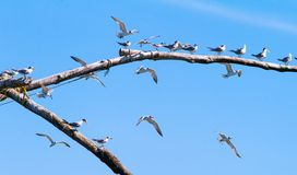 Seagulls resting Stock Images