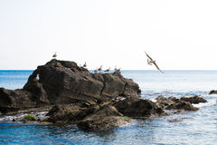 Seagulls on a rock Royalty Free Stock Photos