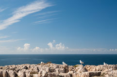 Seagulls on a rock near the Mediterranean Sea Royalty Free Stock Images
