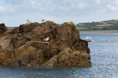 Seagulls on a rock in normandy Royalty Free Stock Photos