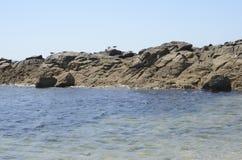 Seagulls on  rocks Royalty Free Stock Photo