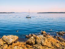Seagulls at the rocky shore of Sidney BC, Canada royalty free stock image