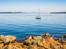 Seagulls at the rocky shore of Sidney BC, Canada royalty free stock photos