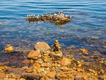 Seagulls at the rocky shore of Sidney BC, Canada stock images