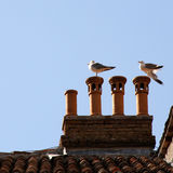 Seagulls on the roof Stock Photo