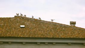 Seagulls on the roof. Building, birds and sky. The feathered guests stock video footage