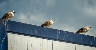 Seagulls on the roof Stock Photos