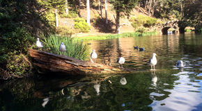Seagulls in a row royalty free stock photos