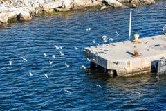 Seagulls runt om den konkreta förtöja plattformen royaltyfria foton