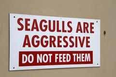 Seagulls są Agresywni. Obrazy Royalty Free