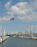 Seagulls & Sailboats Royalty Free Stock Photo