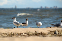 Seagulls on the sand Stock Image