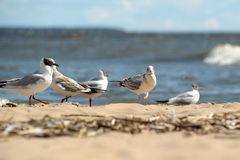 Seagulls on the sand Royalty Free Stock Photography