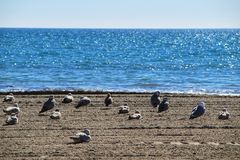 Seagulls on the sand on the beach. In a cloudy day of winter royalty free stock photo