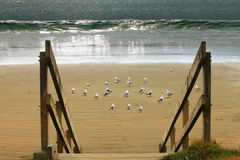 Seagulls on the sand at a beach Stock Photos