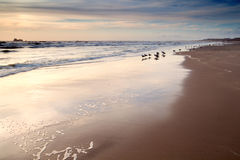 Seagulls on sand beach at sunset Stock Photo