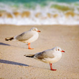 Seagulls on the Sand Stock Photography