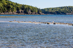 Seagulls on Sandbar in Maine Stock Images