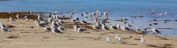 Seagulls sandbar Royalty Free Stock Images