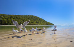 Seagulls on sandy beach Royalty Free Stock Photo