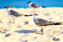 Seagulls on sandy beach Royalty Free Stock Photography