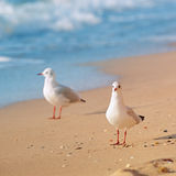 Seagulls and sandy beach Royalty Free Stock Images