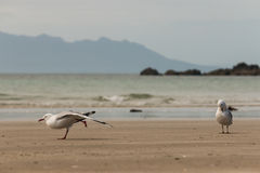 Seagulls on sandy beach Royalty Free Stock Photos