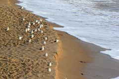 Seagulls on sandy beach at wintertime Stock Photography
