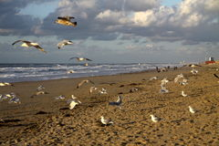 Seagulls at Scheveningen Stock Photo