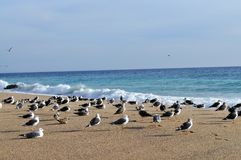 Seagulls by the sea royalty free stock photo