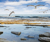 Seagulls at sea Stock Photography