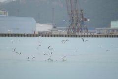 Seagulls on a sea Royalty Free Stock Photos