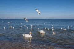 Seagulls at the sea, nature,europe Stock Image