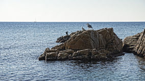 Seagulls in the sea. Seagulls rest on the sea cliff Stock Photography