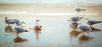 Seagulls. At the sea shore Stock Image