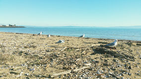 Seagulls by the sea. Spotted some seagulls along the coast of a random seaside Royalty Free Stock Images