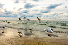 Seagulls and Sea Sunset Royalty Free Stock Photos