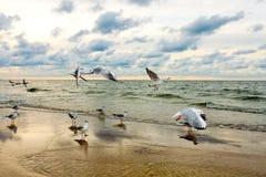 Seagulls and Sea Sunset Royalty Free Stock Photos