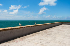 Seagulls at the sea Royalty Free Stock Images