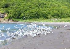Seagulls on seacoast Royalty Free Stock Photo