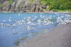 Seagulls on seacoast Royalty Free Stock Image