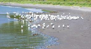 Seagulls on seacoast Stock Photo