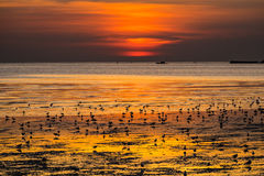 Seagulls. Seaguns on a part of mangrove forest on sunset background in twilight time royalty free stock photos