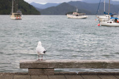 SEAGULLS AT SEAPORT Royalty Free Stock Image